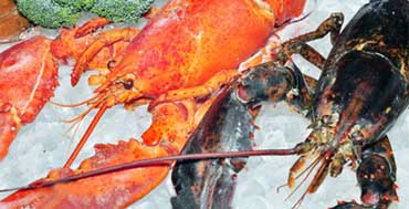 Safeline Group Middle-East | Importers of seafood and beef