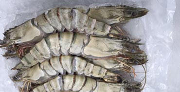 Supplier of frozen seafood | Qatar and Middle-East